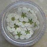Zarte Echt Blüten - Cremefarben
