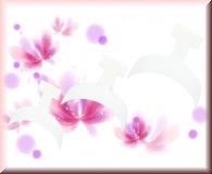 20 Farb-French Spitzen - Weiß