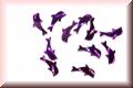 Glänzende Delfine - Violett